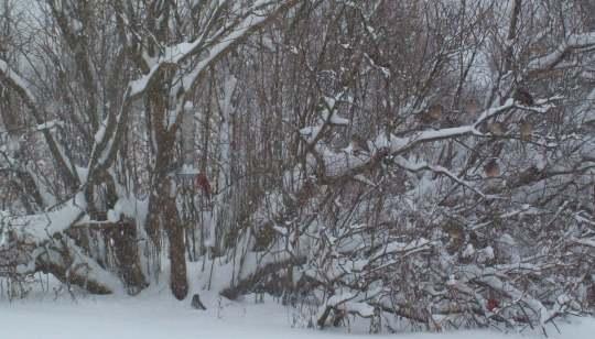 Winter menagerie