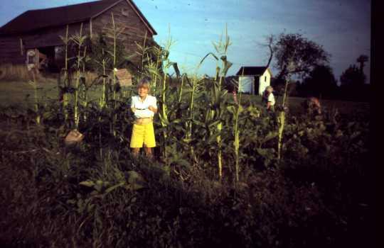 Kerry's garden