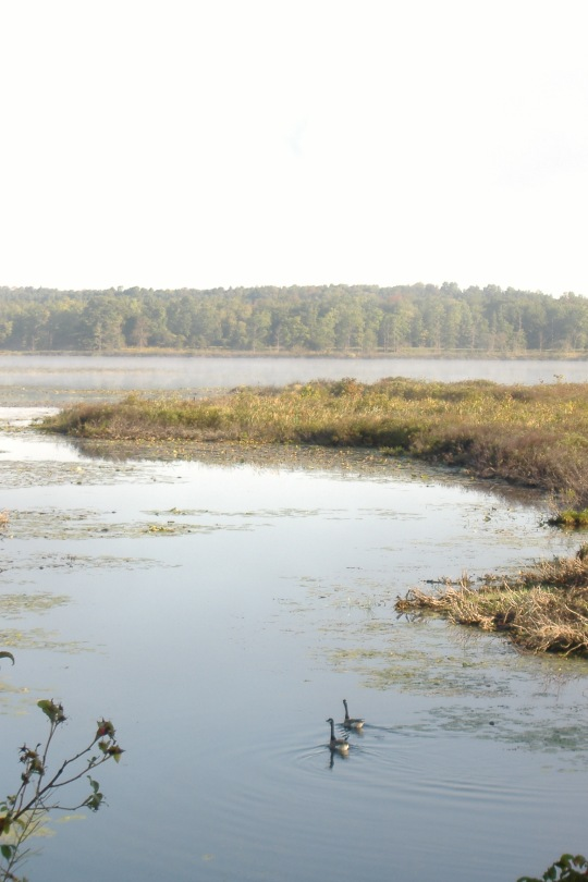 Weaver Lake Morning