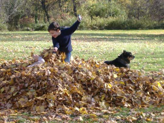 Life is a leaf pile