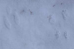 Snow Fossils