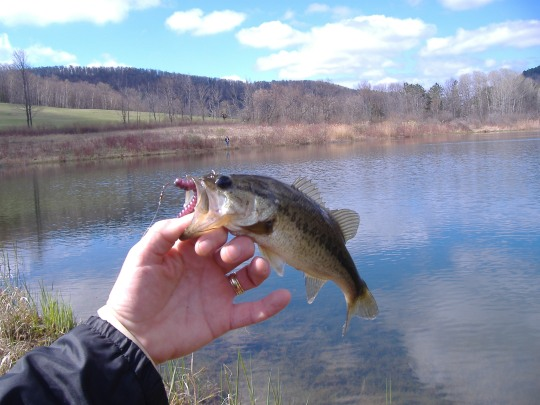 Bass, Corporation Pond, and Ryan
