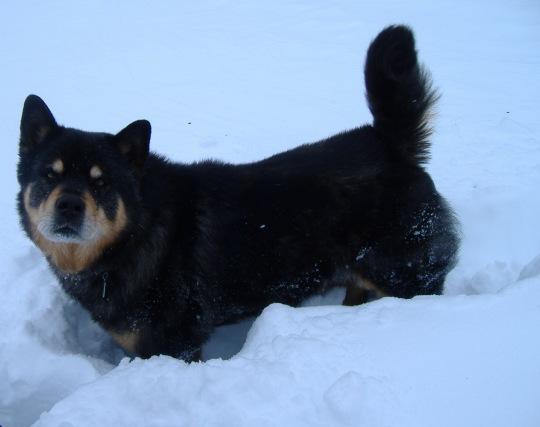 Chuy The Wonderdog 2001 - 2016