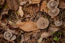 Fungus Season