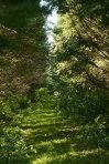 Thursday Trail